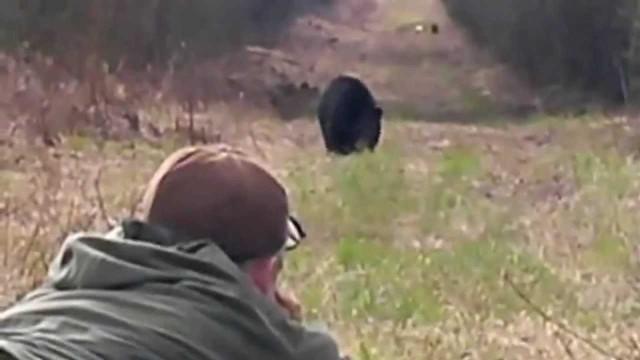 Lov medvěda v Canadě