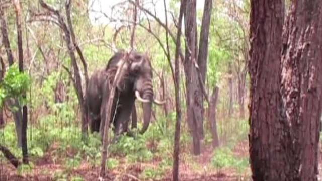 Lov slona
