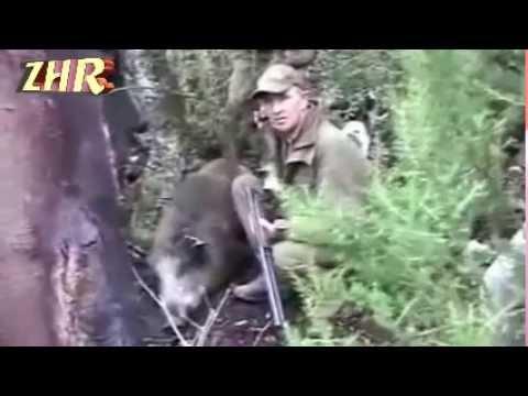 Lov prasete v Tunisu