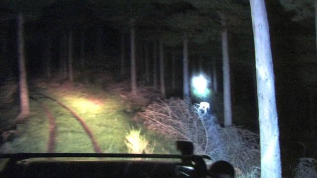 Noční lov prasat