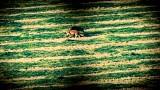 Lov lišek