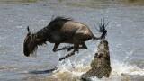 Útoky predátorů