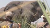 Lov v Africe- sestřih