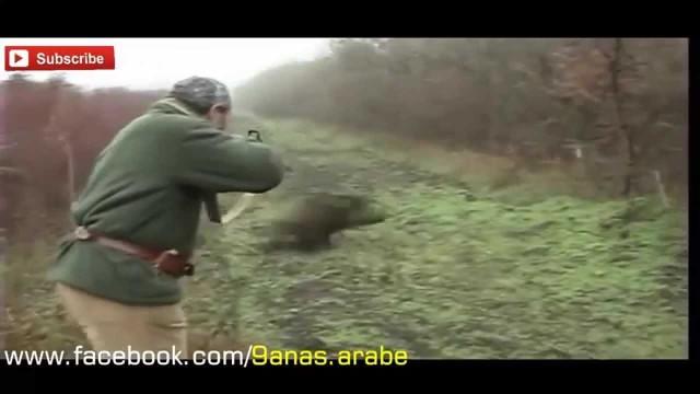 lov divočáků – sestřih