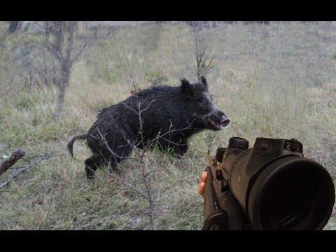 Pěkný lov