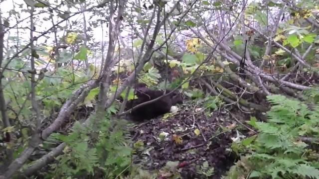 Lov medvěda Aljaška