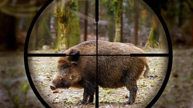 to nejlepší z lovu prasat 2014