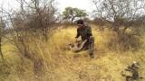 Lov v Africe