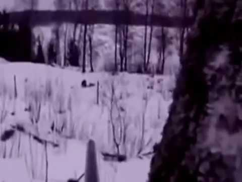 Lov prasat zima 2015