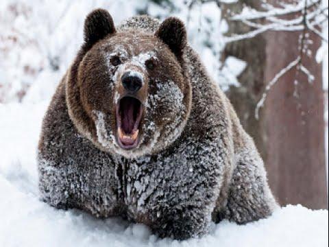 Lov medvěda v Rusku