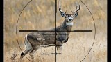 Lov jelenů