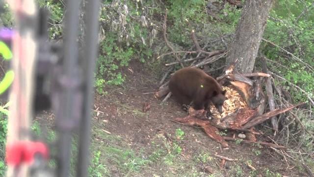 Lov černého medvěda lukem
