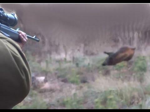 Lov prasat  – pěkné video