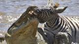 Útok krokodýla
