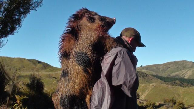 Lov prasat na Novém Zélandu