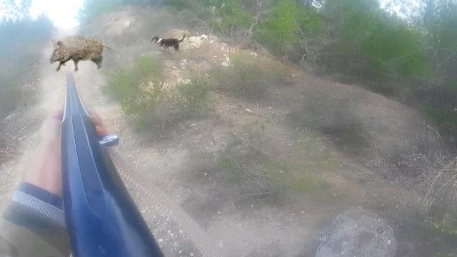Naháňka na prasata 2015