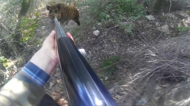 Lov prasat se psi 2015