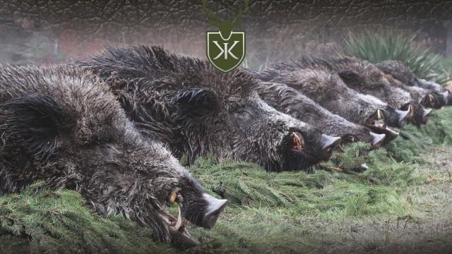 Lov prasat v Itálii