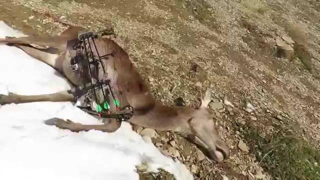 Lov jelena Nový Zéland