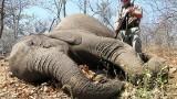 Lov slona v Africe